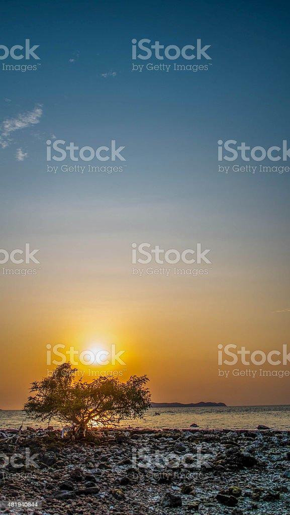 beach sunrise with trees stock photo