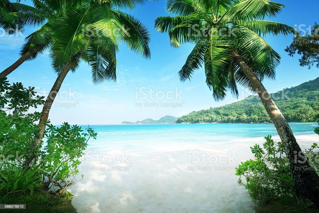 beach Takamaka, Mahe island, Seychelles stock photo