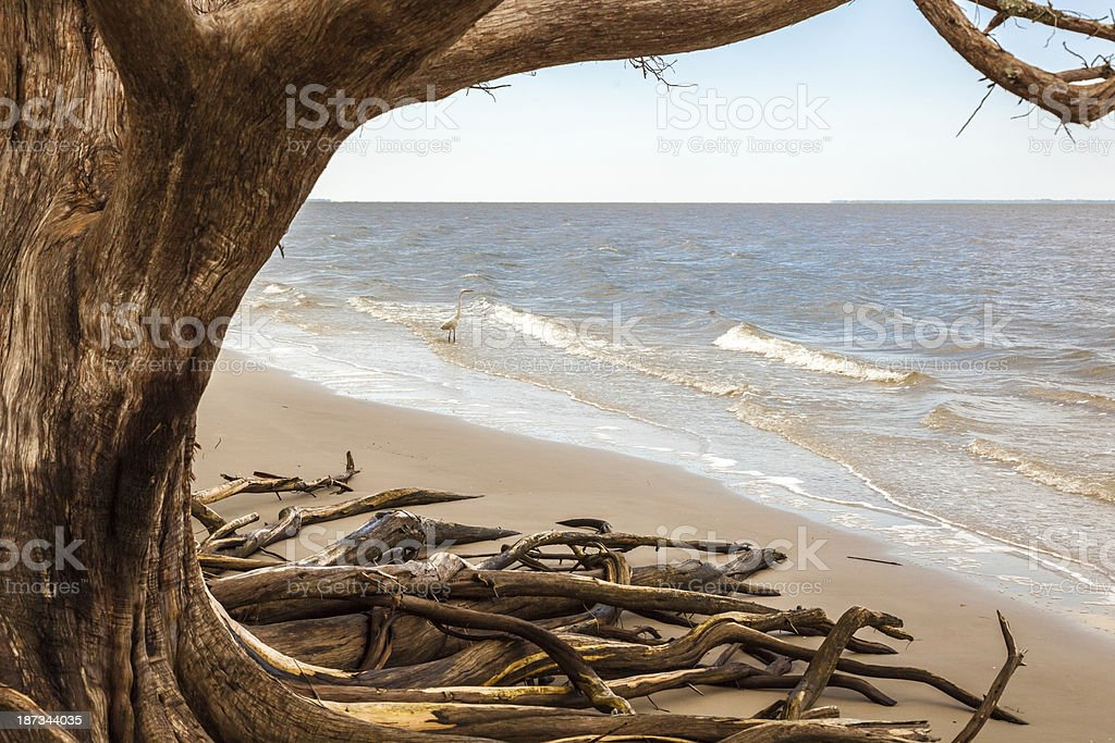 Beach Tree and Egret royalty-free stock photo