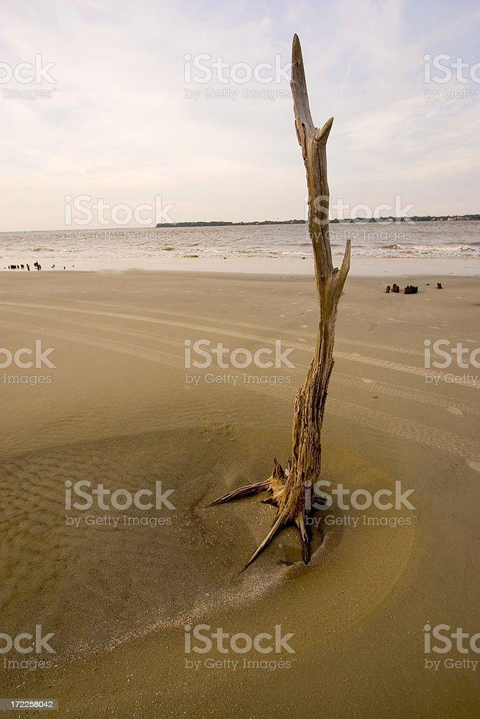 Beach Tree royalty-free stock photo