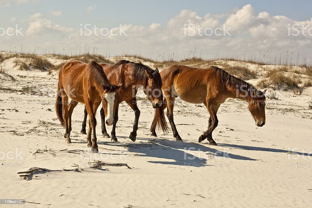Beach Trio stock photo