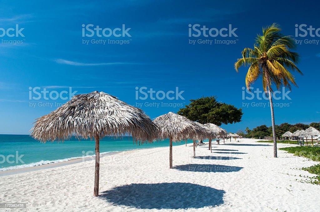 Beach umbrellas and coconut tree stock photo