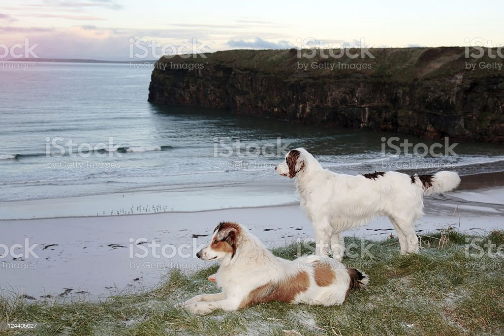 beach view with two dogs royalty-free stock photo