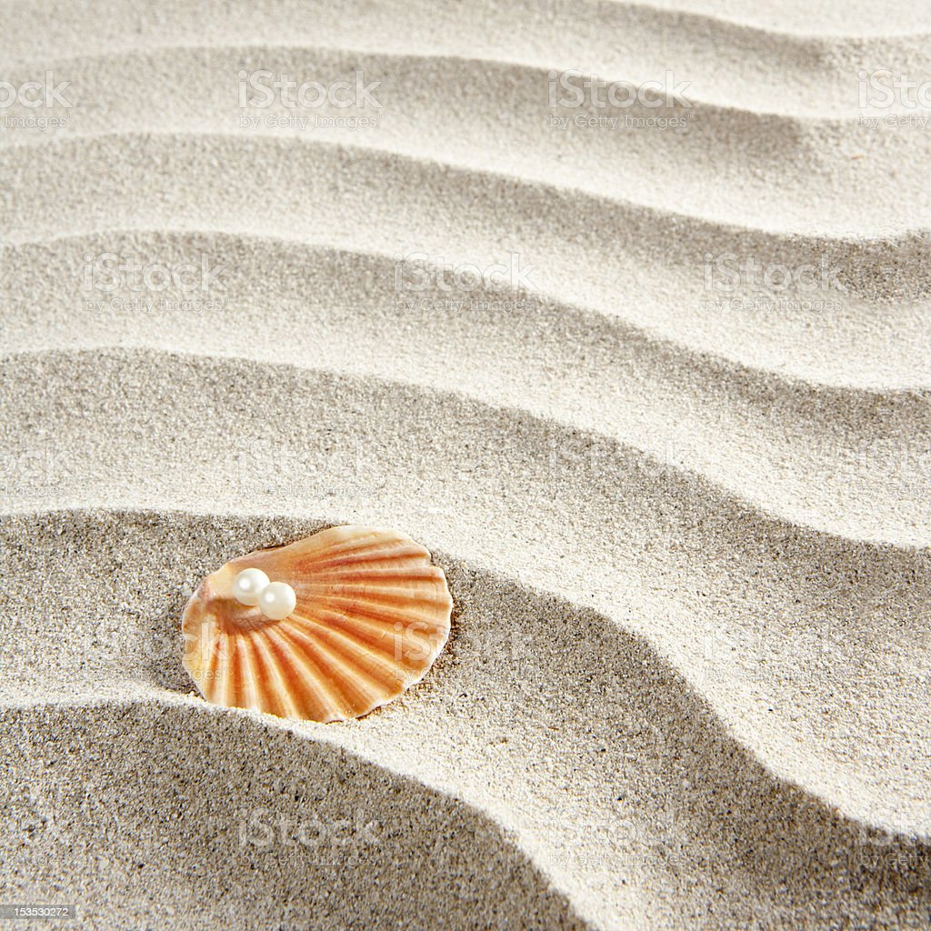 beach white sand pearl shell clam macro royalty-free stock photo
