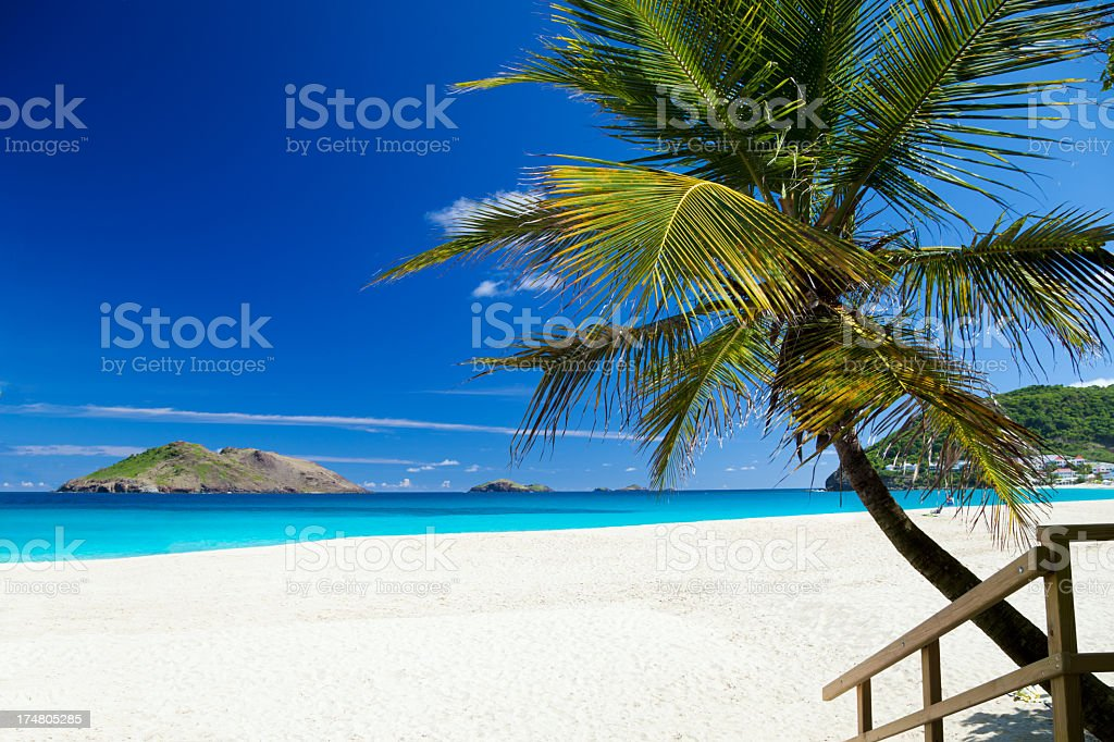 beach with a palm tree in St.Barths, French West Indies stock photo