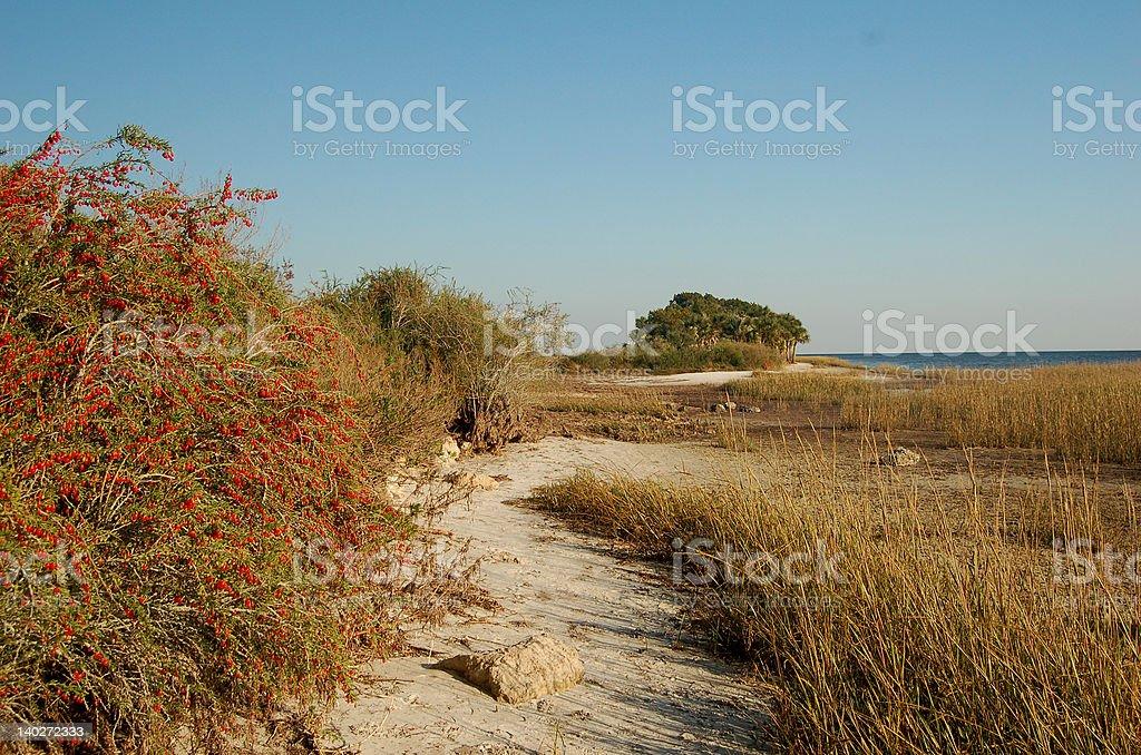Playa con bayas foto de stock libre de derechos