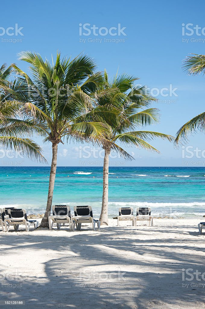 Beach with chairs and palm trees royalty-free stock photo
