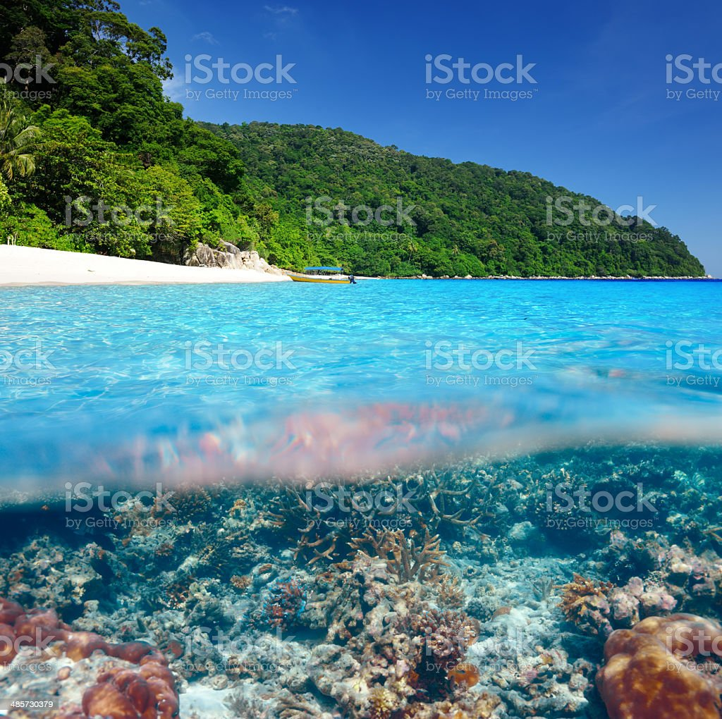 Beach with coral reef underwater view stock photo