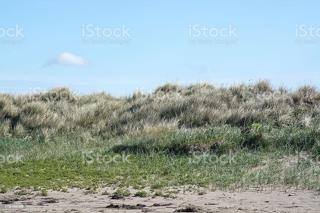 Beach with grass stock photo