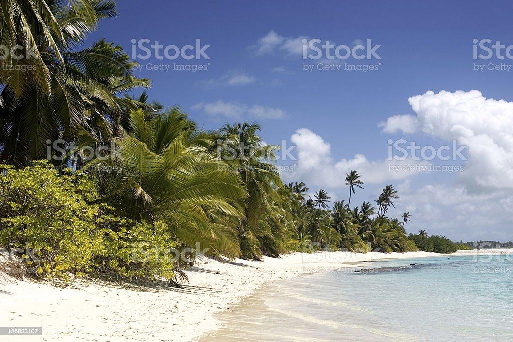 beach with palm tree royalty-free stock photo