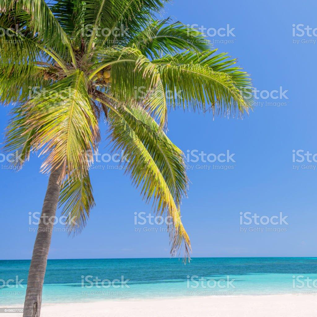 Beach with palm trees, caribbean sea stock photo