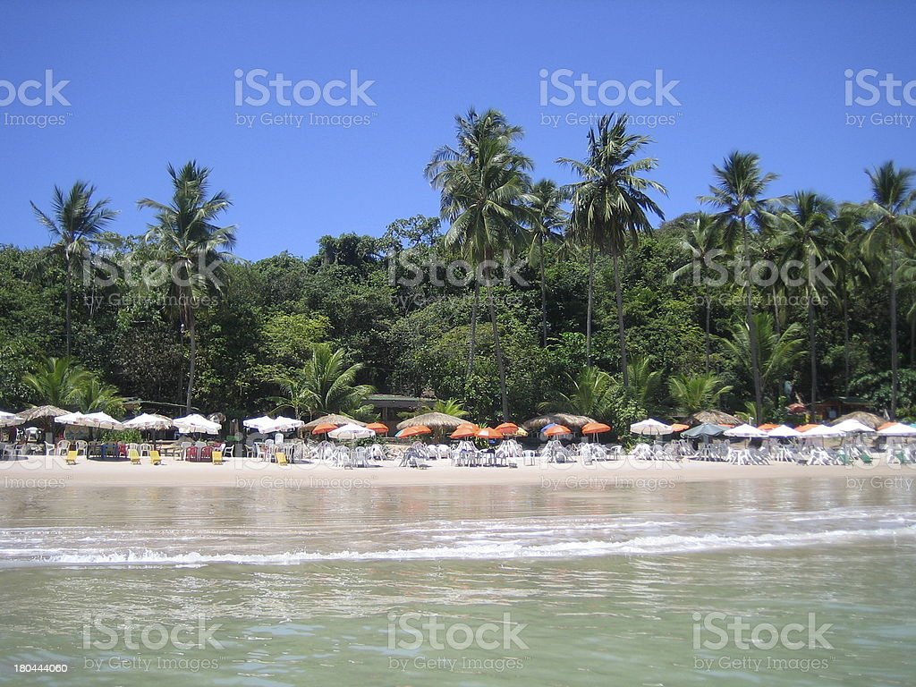 Beach with Palm Trees from the Water in Brazil stock photo