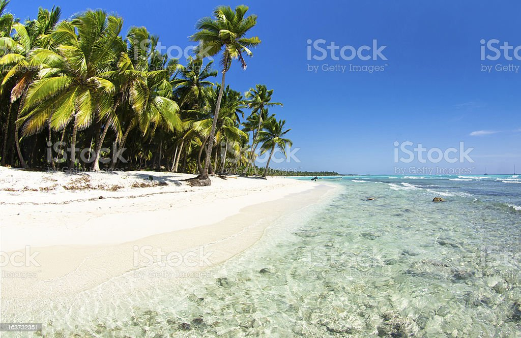 beach with palm trees royalty-free stock photo