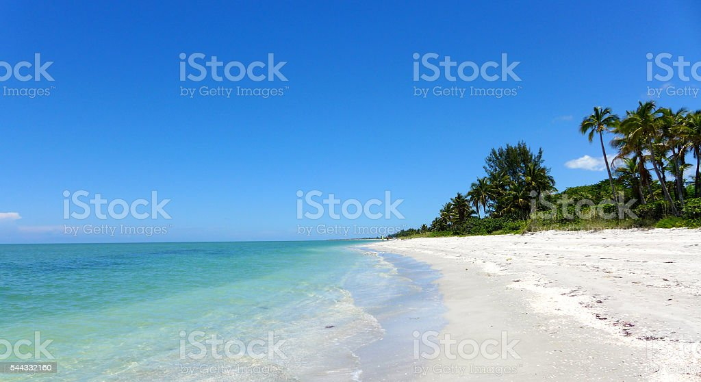 Beach with palm trees stock photo