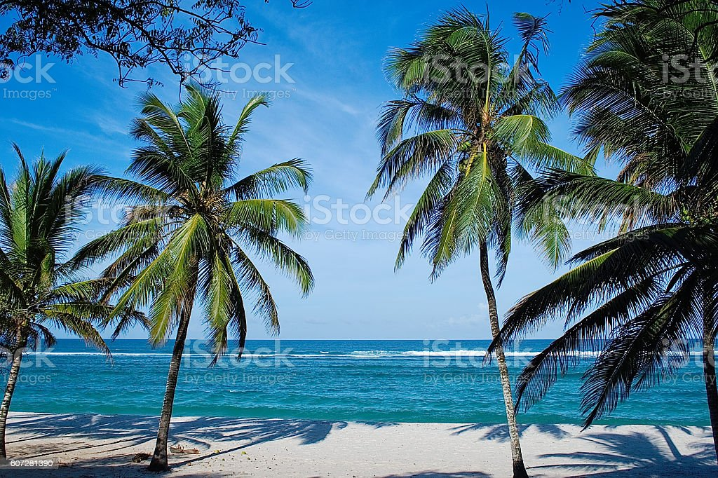 Beach with palms in Kenya stock photo