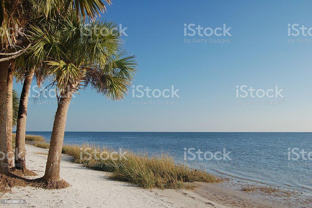 Playa con palmeras foto de stock libre de derechos