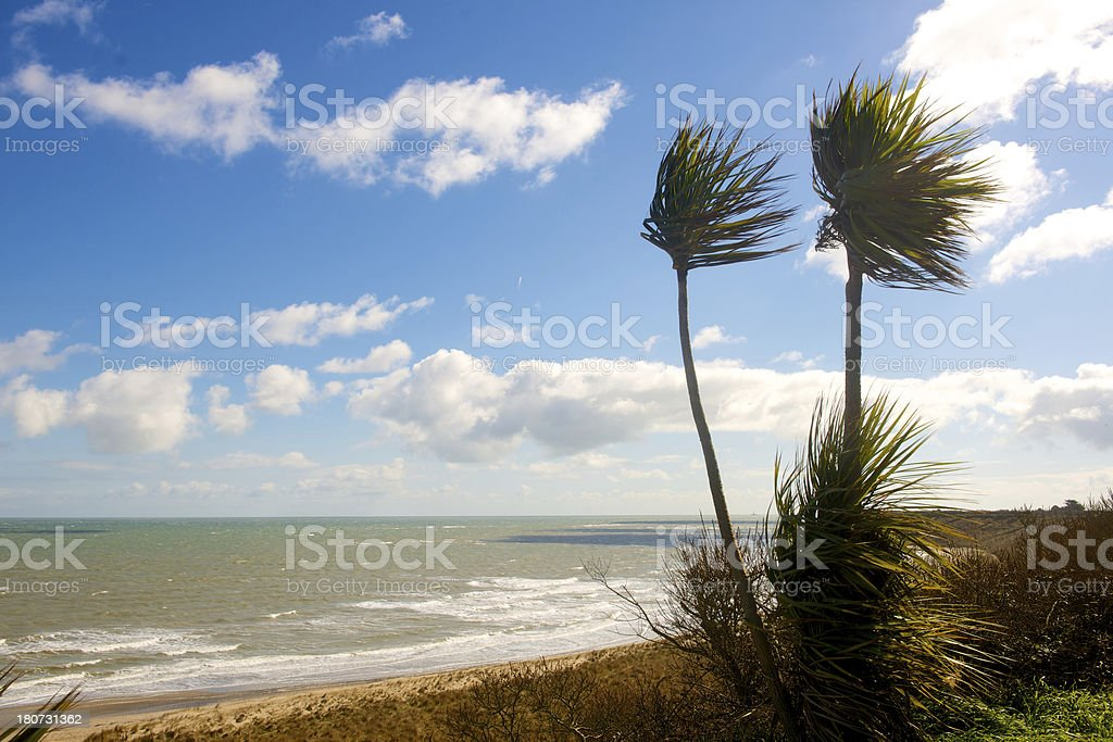 Beach with palms royalty-free stock photo