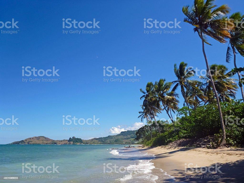 Beach with palmtrees stock photo