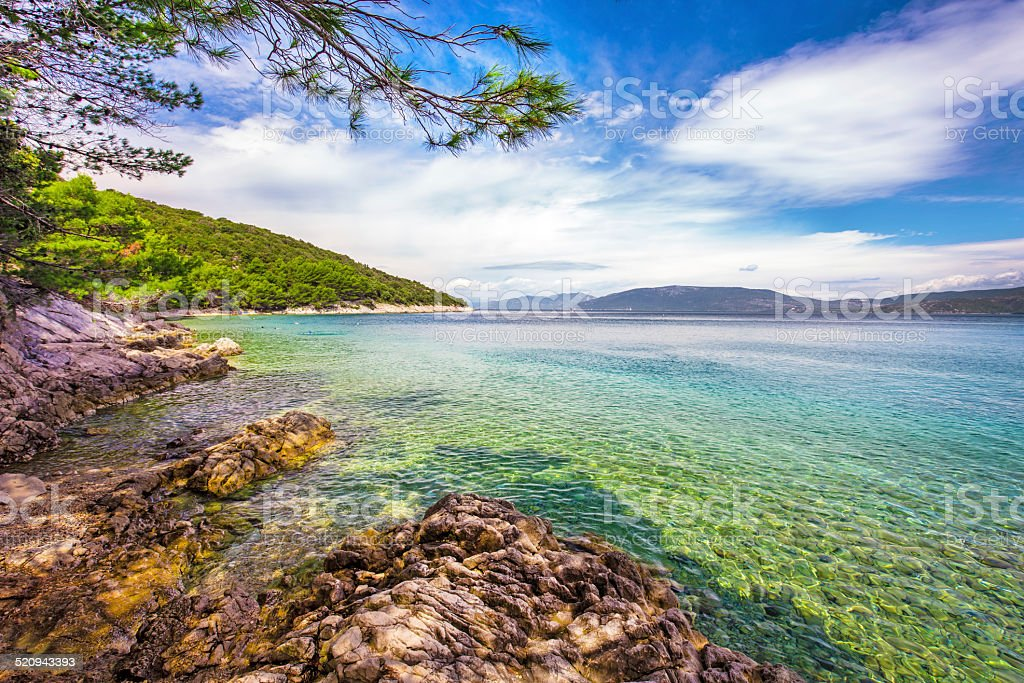 Beach with pine tree on the island Cres in Croatia stock photo