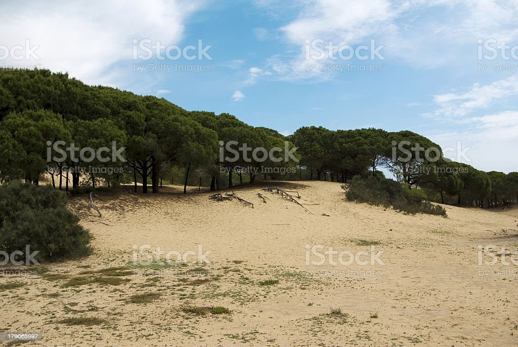 Playa con pinos royalty-free stock photo