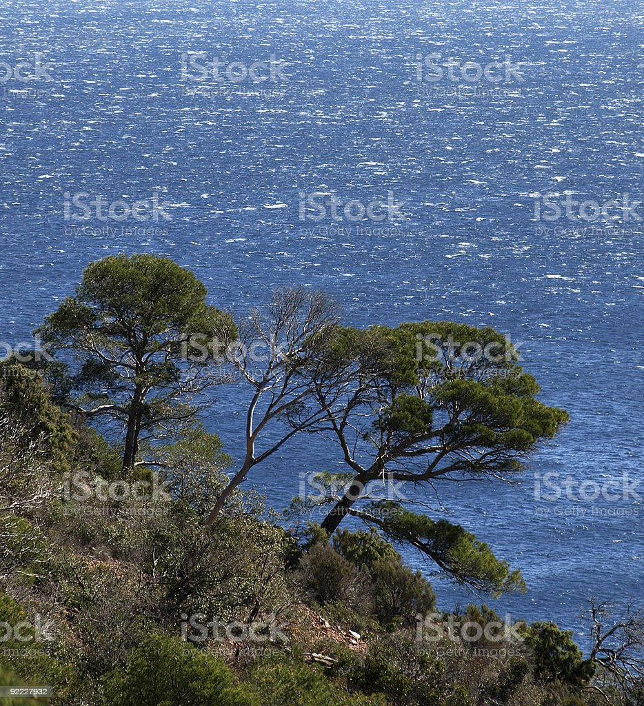 Beach with pinetree  Cote D'Azur near Nizza and Cannes stock photo