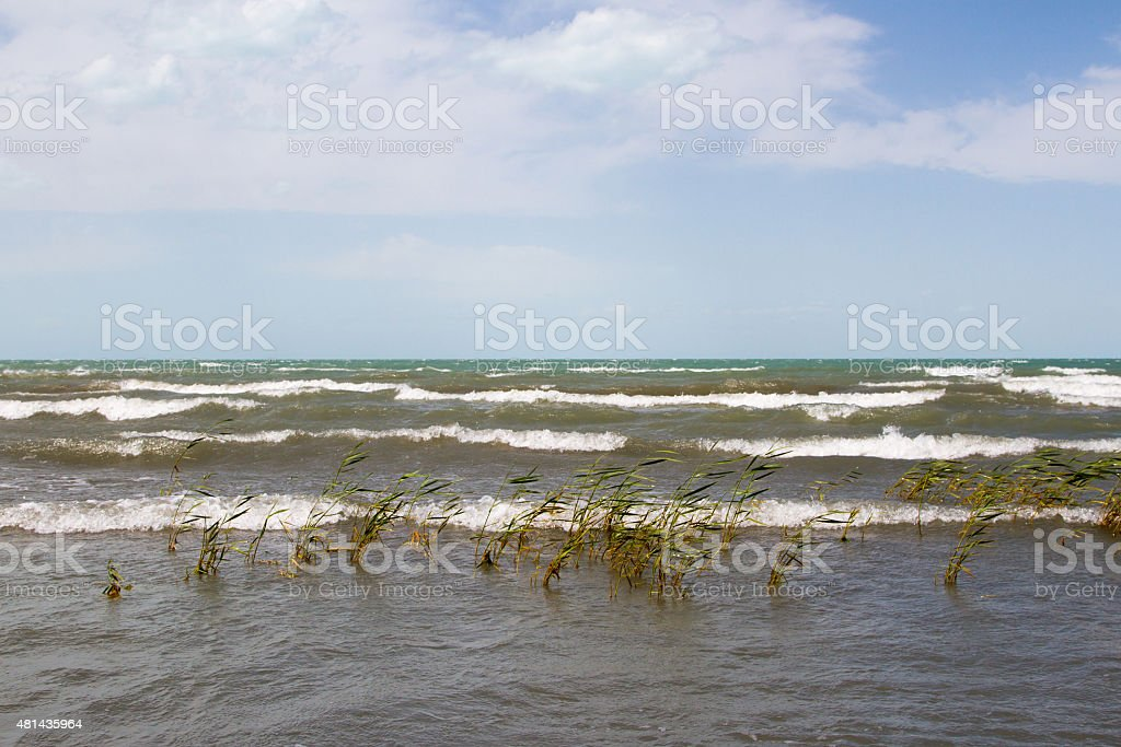 beach with reeds stock photo