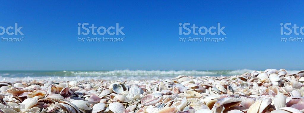 Beach with seashells stock photo