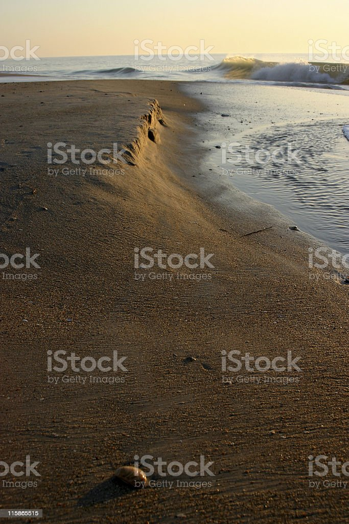 Beach with Shell royalty-free stock photo