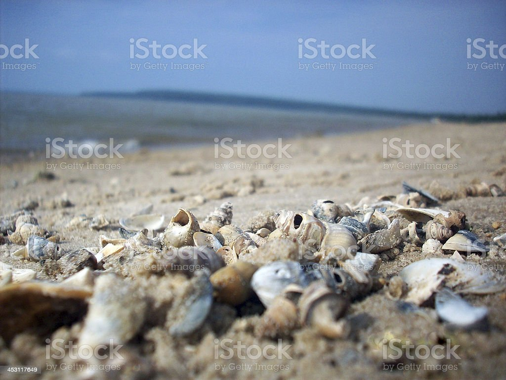 Beached Shells royalty-free stock photo