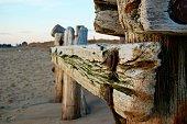 Beach-Wood Pilings