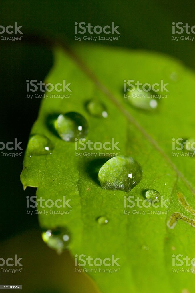 beads of water royalty-free stock photo
