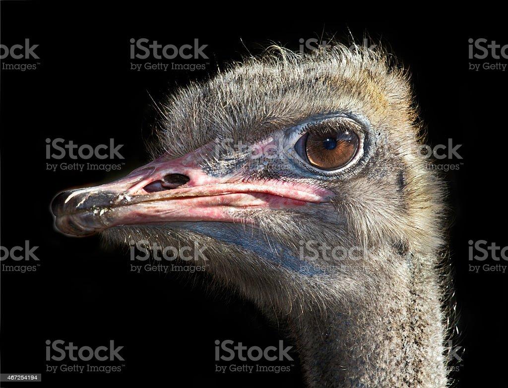 beady eye stock photo