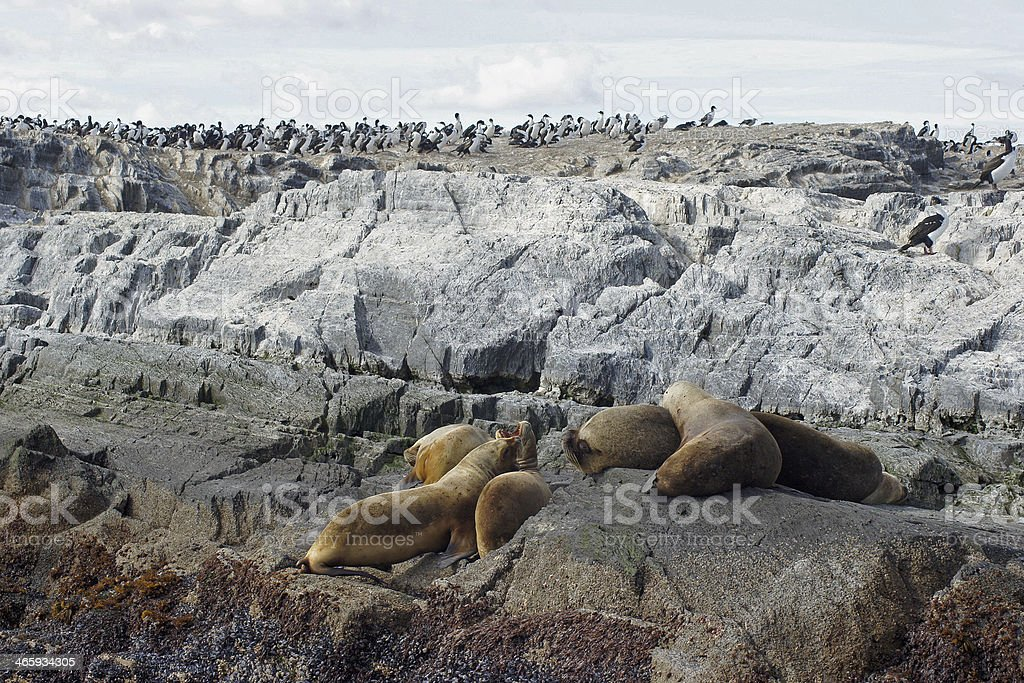 Beagle Channel, Argentina royalty-free stock photo