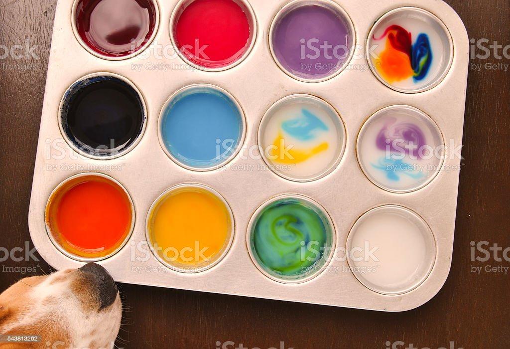 Beagle trying to taste edible paint foto de stock libre de derechos