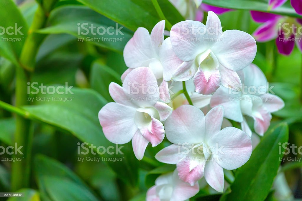 Beam blooming orchids morning stock photo