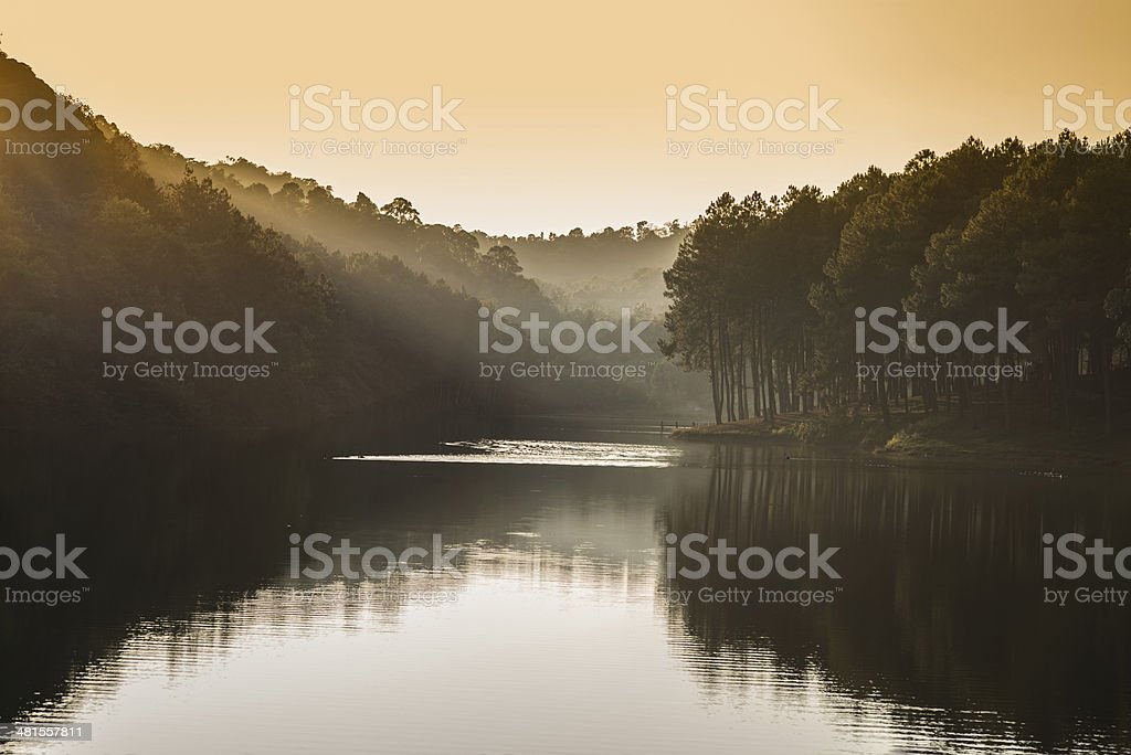 beam of sunset shine on pine forest stock photo