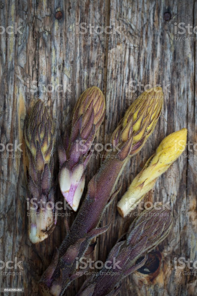 Bean broomrape stock photo