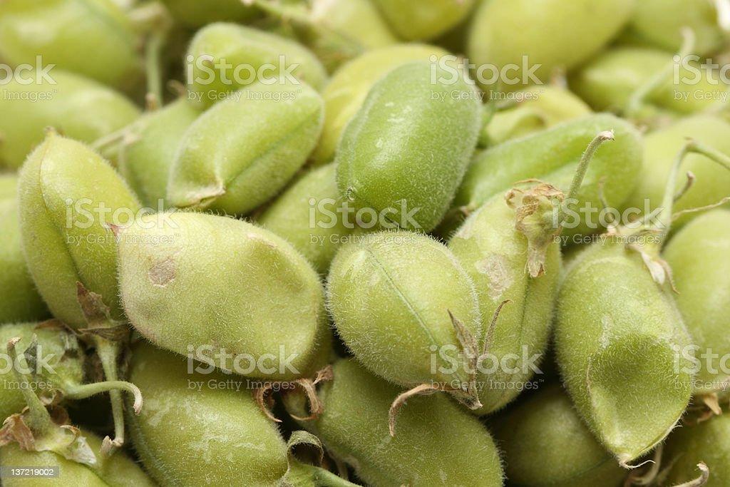 bean pod royalty-free stock photo