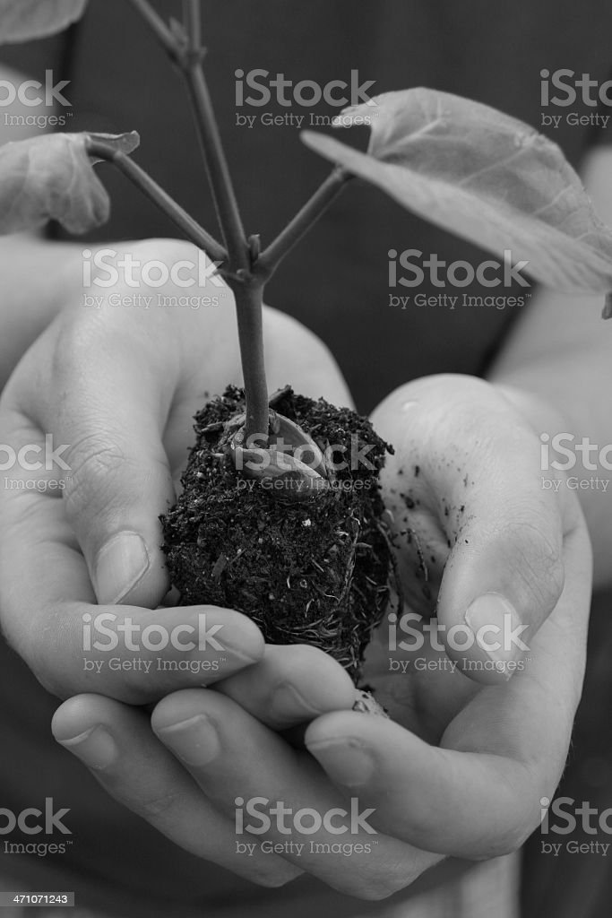 Bean Sprout in Hand stock photo