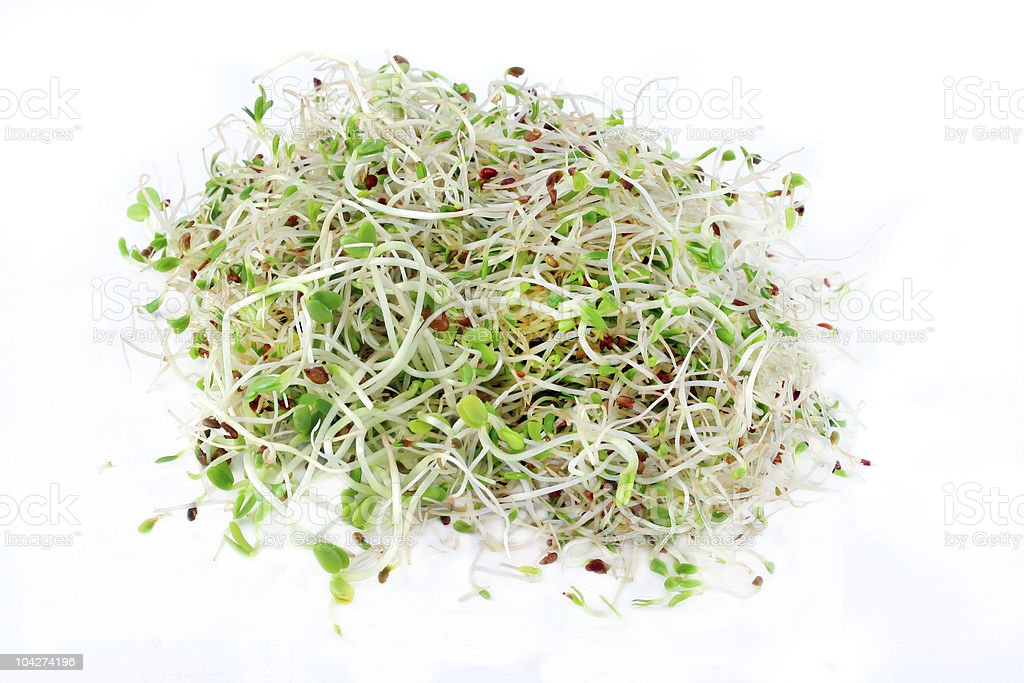 Bean Sprouts on White Background stock photo