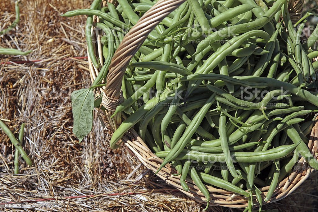 Beans basket on hay 2038 stock photo