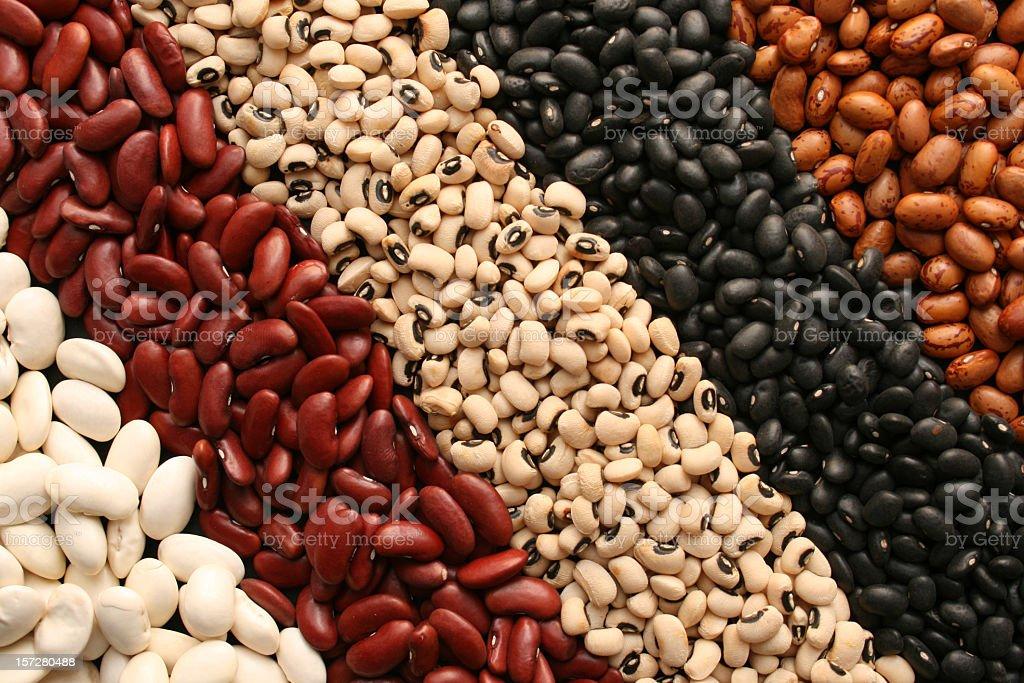 Beans diagonals stock photo