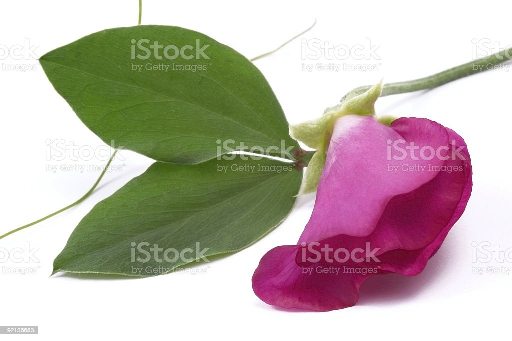 beans flower and leaf royalty-free stock photo