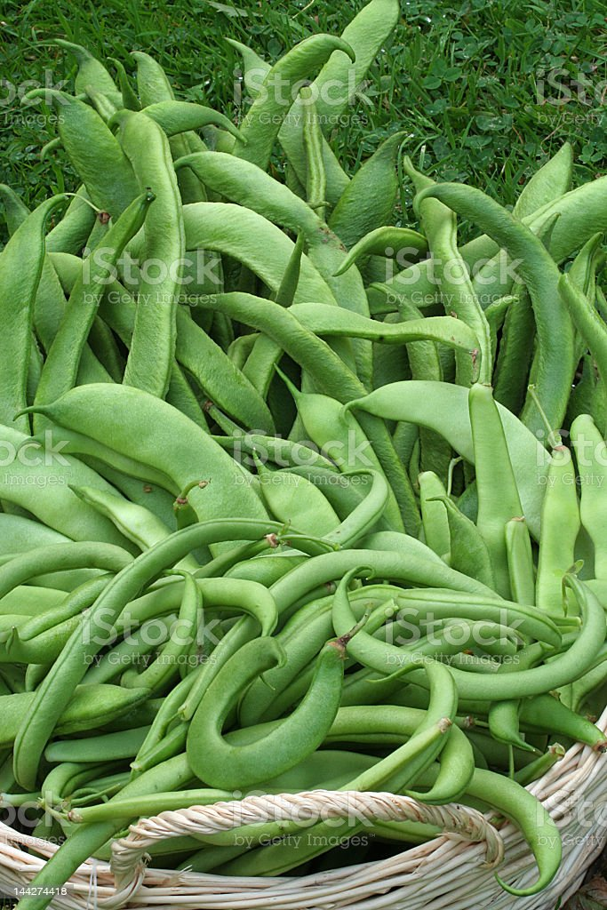 beans galore royalty-free stock photo