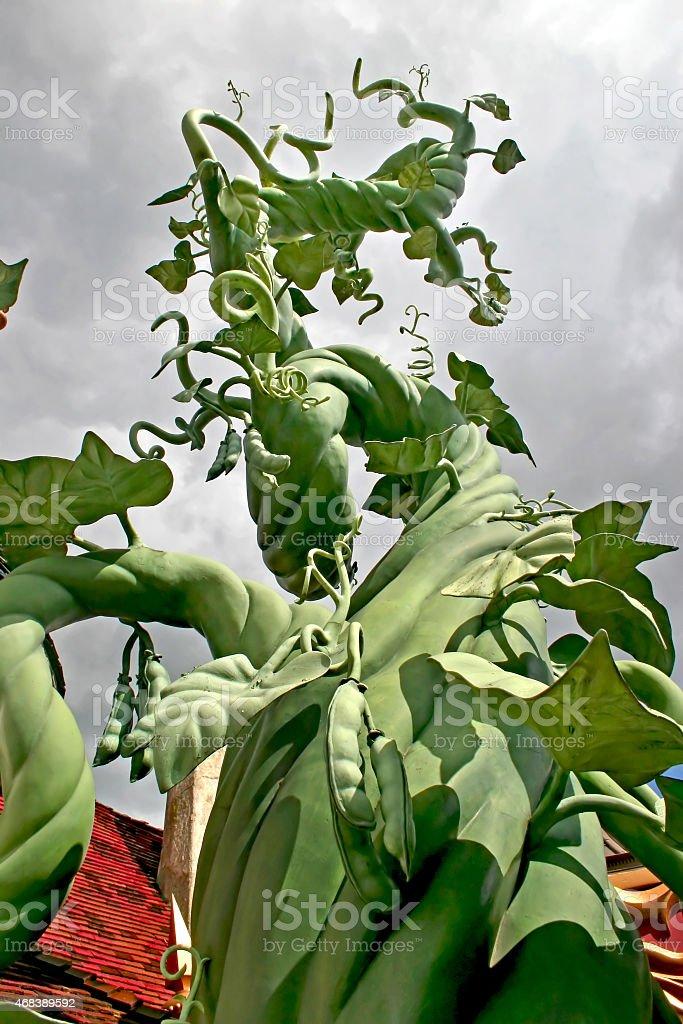 Beanstalk stock photo