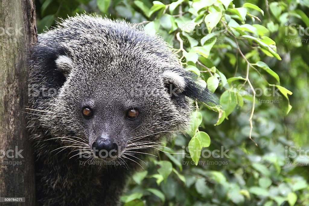Bear Cat stock photo