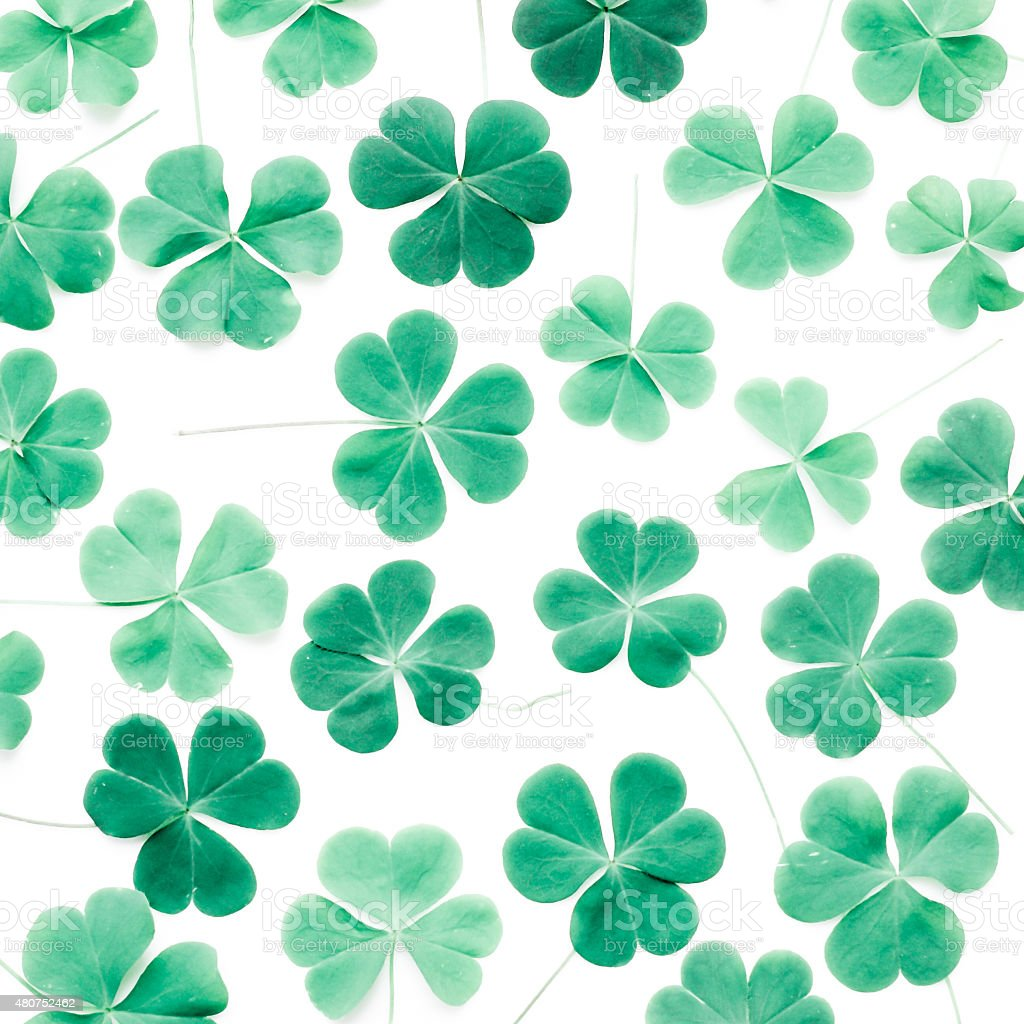 Bear Clover Leaf Green of a St. Patrick's Day Background stock photo