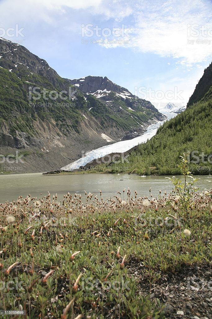 Bear Glacier with Strohn Lake and wildflowers in foreground. stock photo