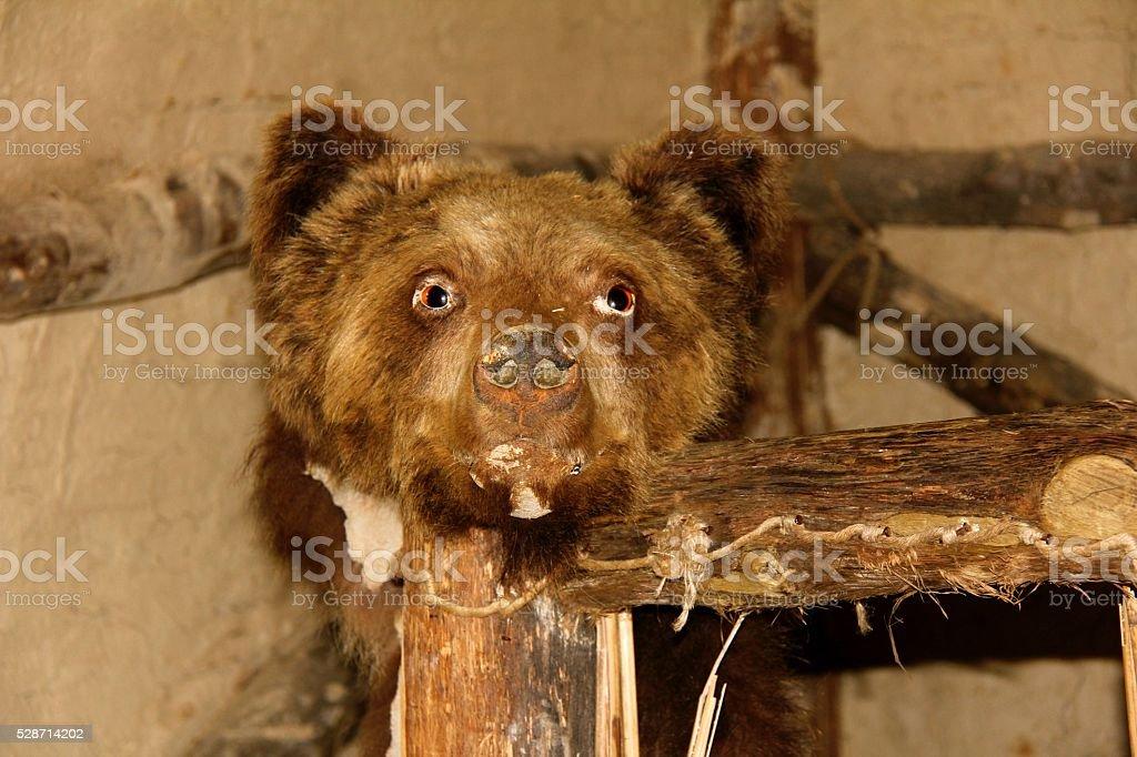 Bear Head stock photo