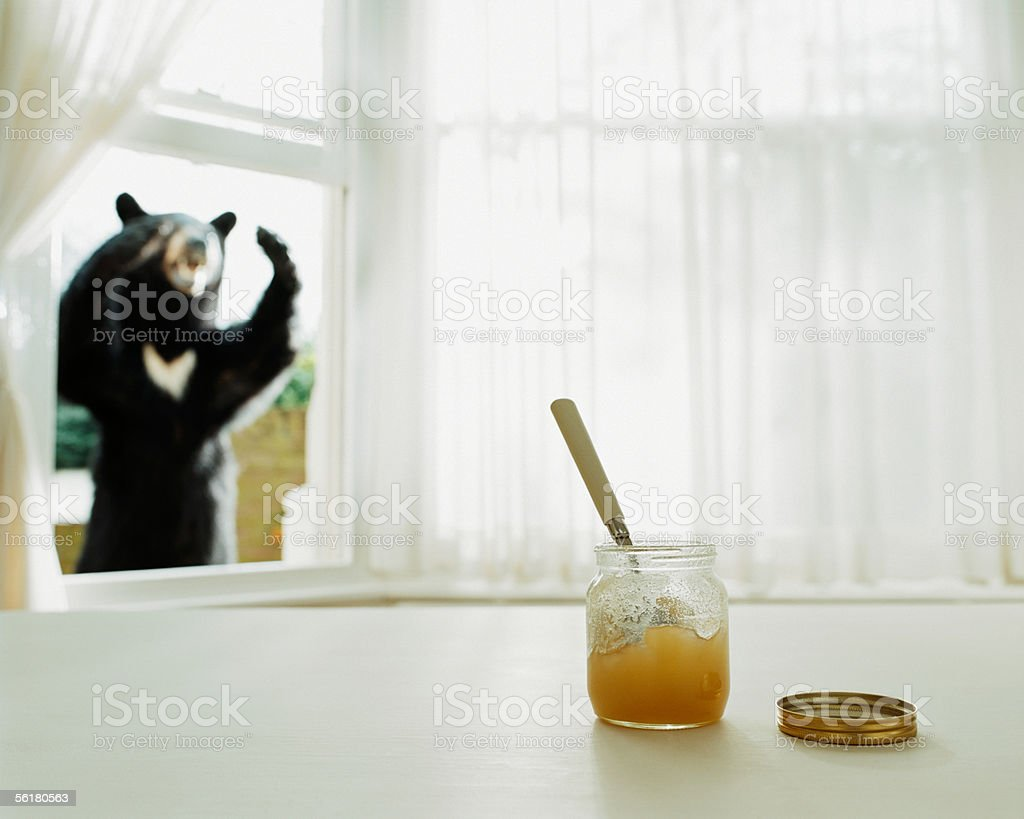 Bear looking at honey pot through a window stock photo